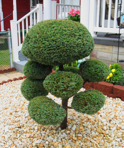 Hampden_Topiary